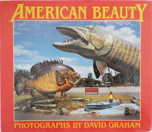 American Beauty (Signed). David Photography - Graham.